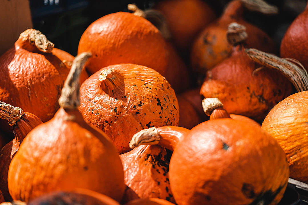 Download Pumpkins on Farmers Market FREE Stock Photo