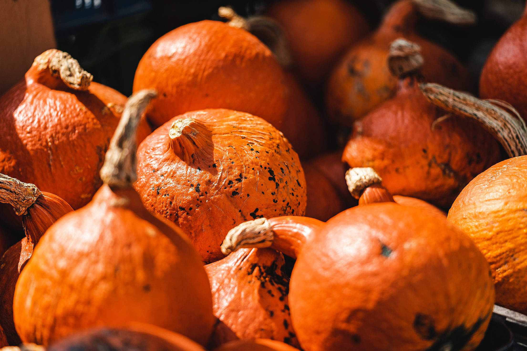 Pumpkins on Farmers Market Free Stock Photo