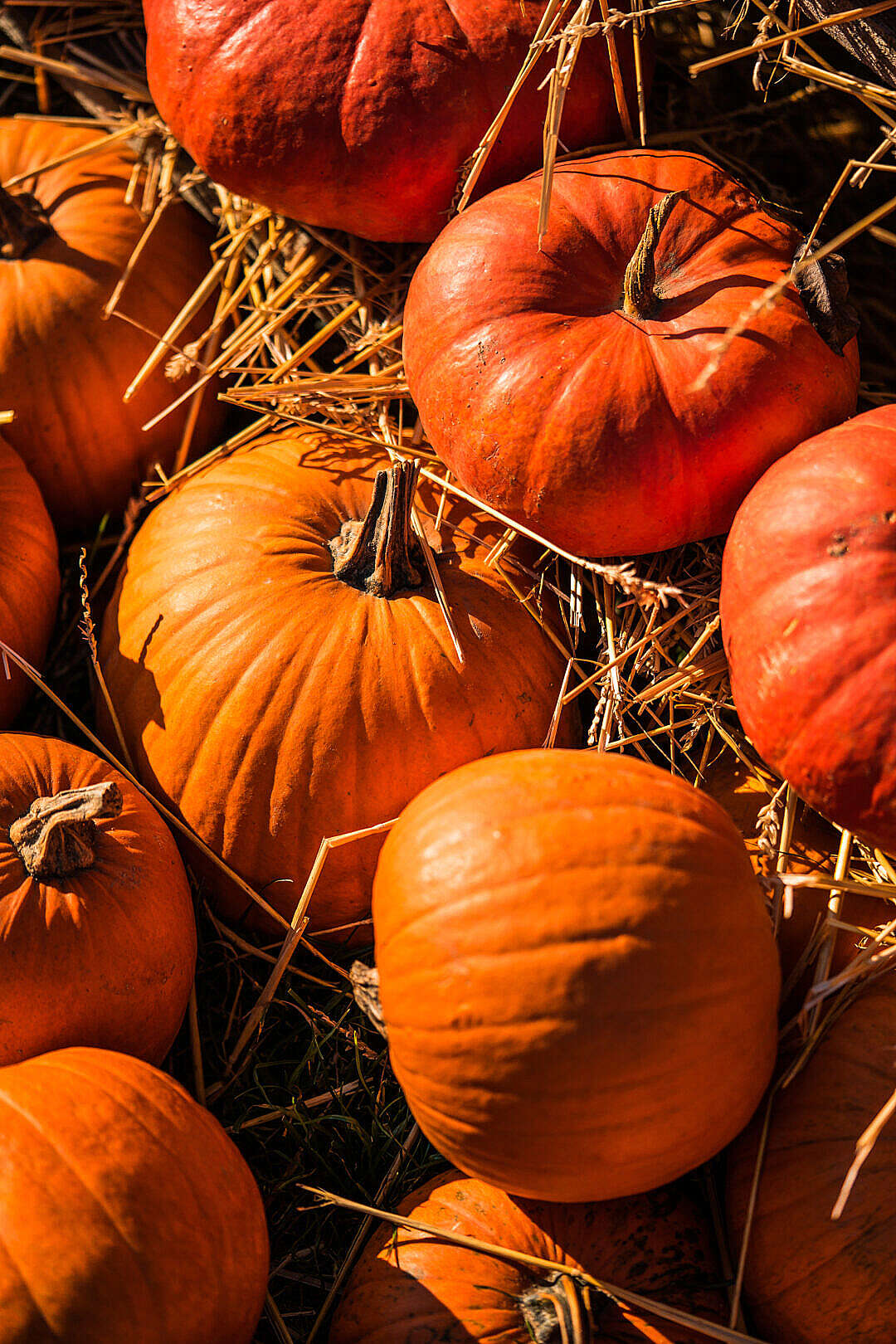 Download Pumpkins on The Straw FREE Stock Photo