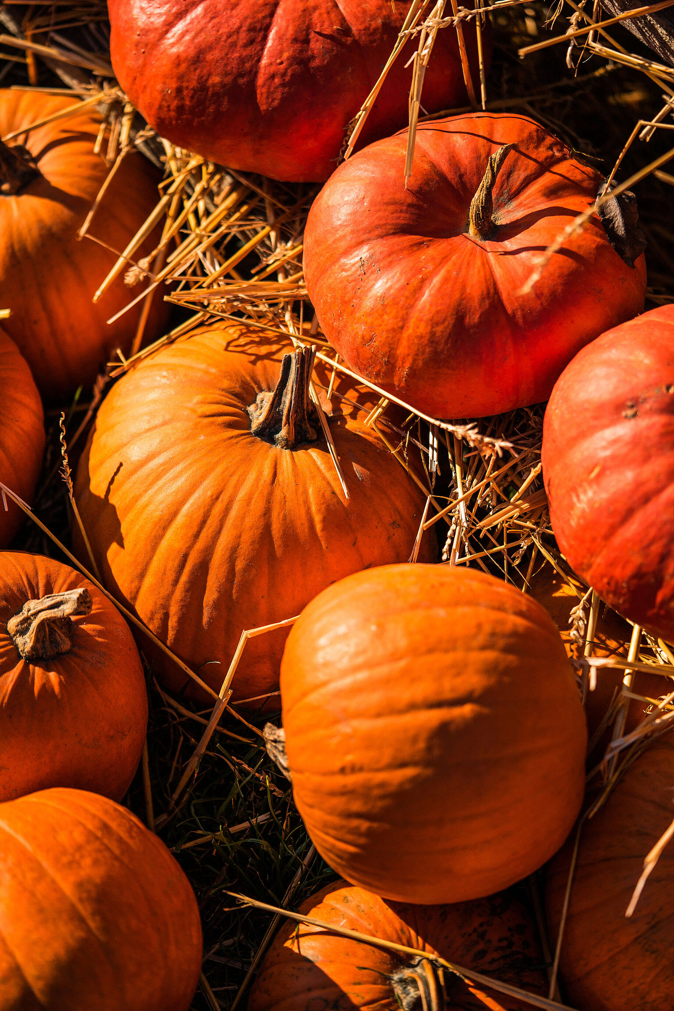 Pumpkins on The Straw Free Stock Photo