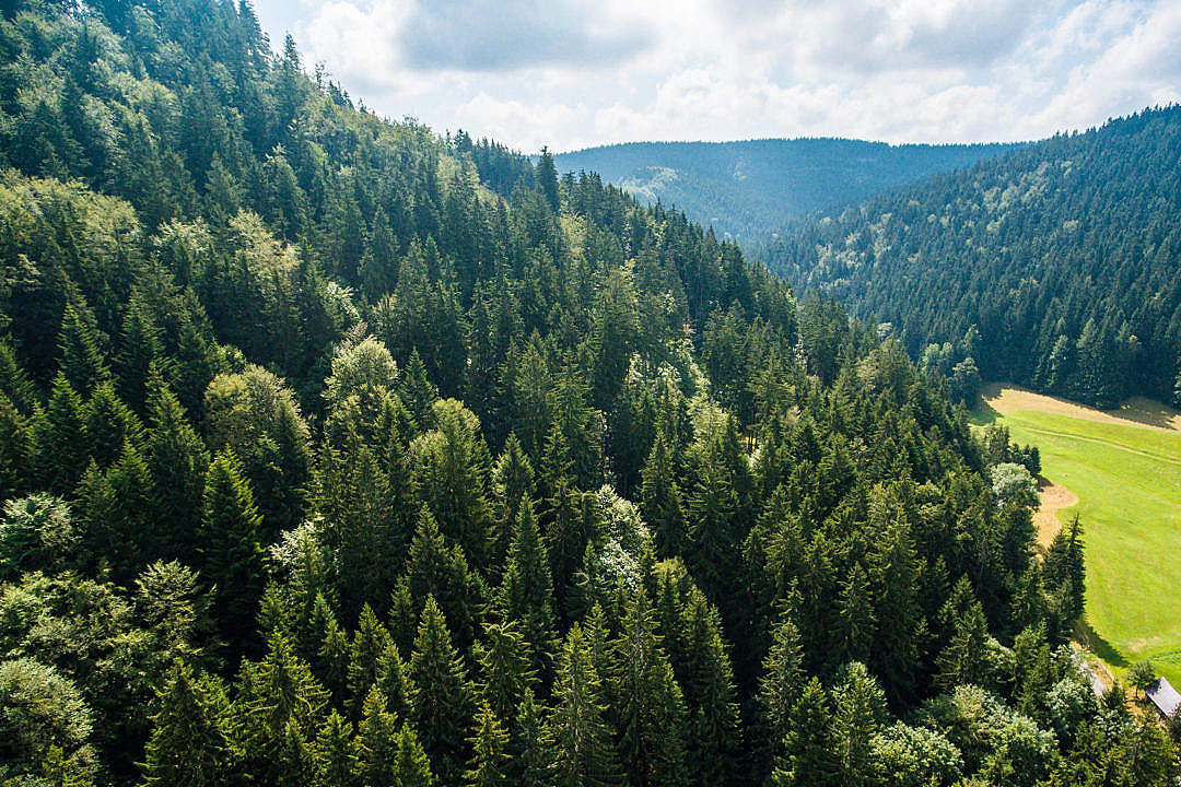 Download Pure Nature: Above Green Forest on the Hill FREE Stock Photo