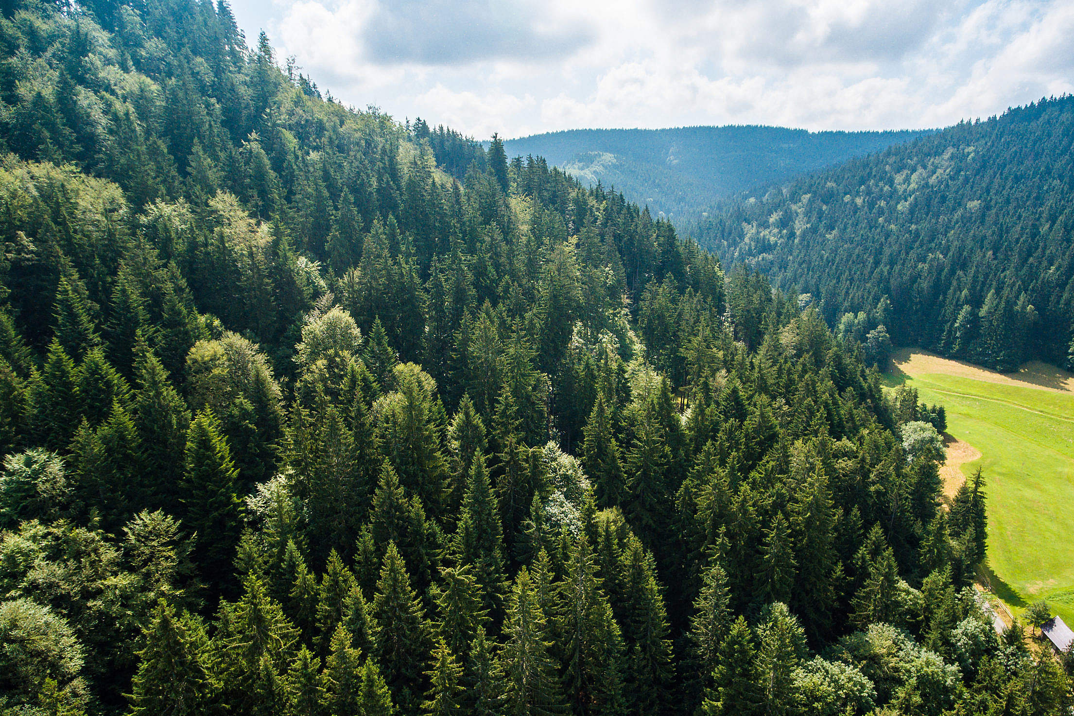 Pure Nature: Above Green Forest on the Hill Free Stock Photo