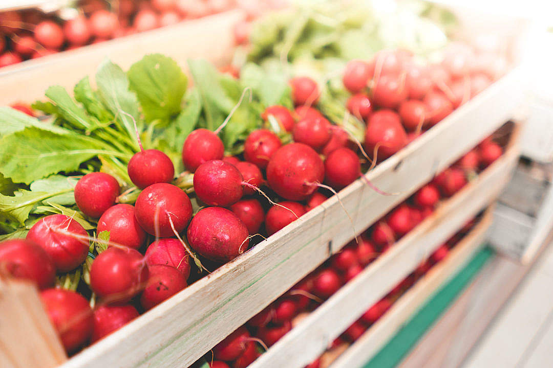 Download Radishes FREE Stock Photo