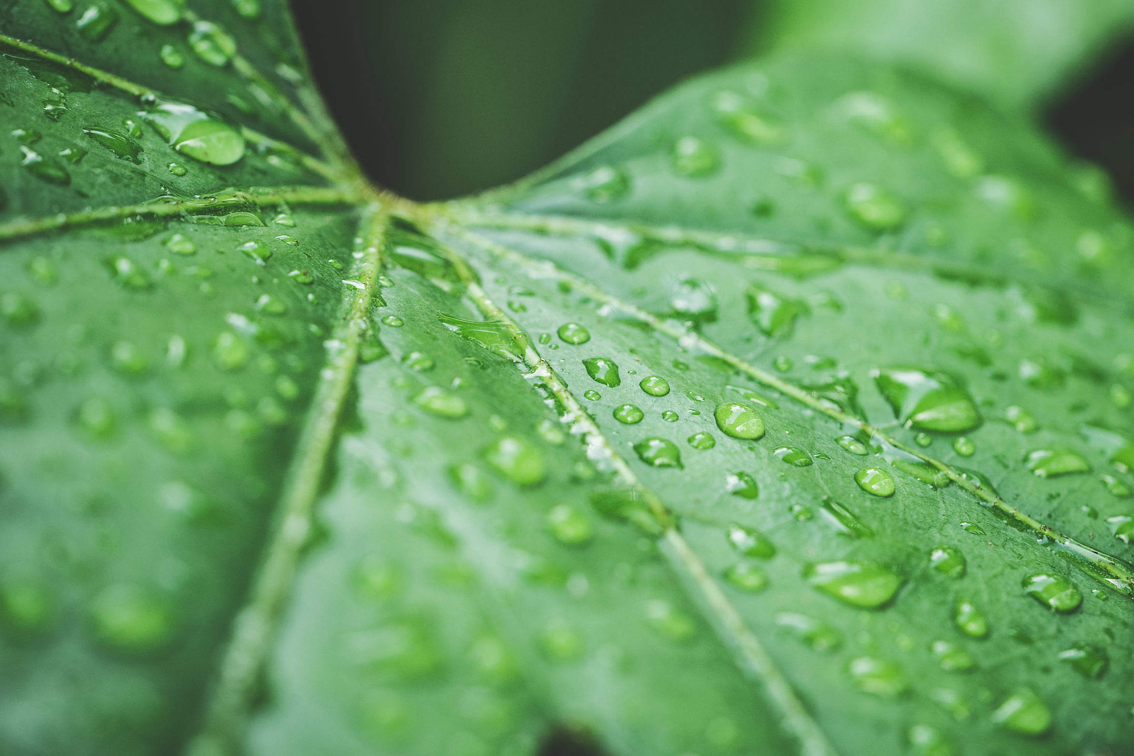 Raindrops on Green Leaf Close Up Free Stock Photo
