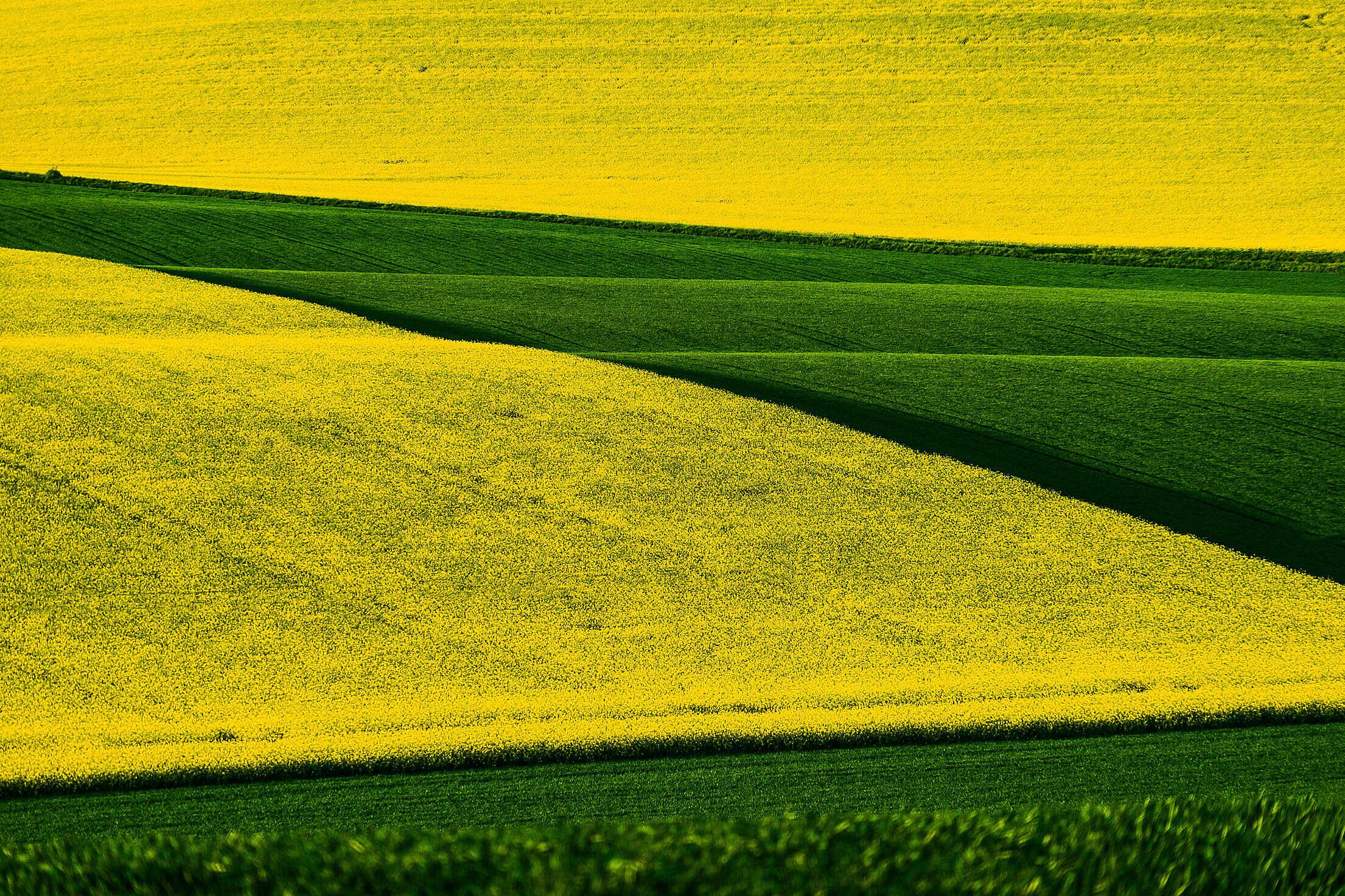 Rapeseed and Wheat Fields in Czechia Free Stock Photo