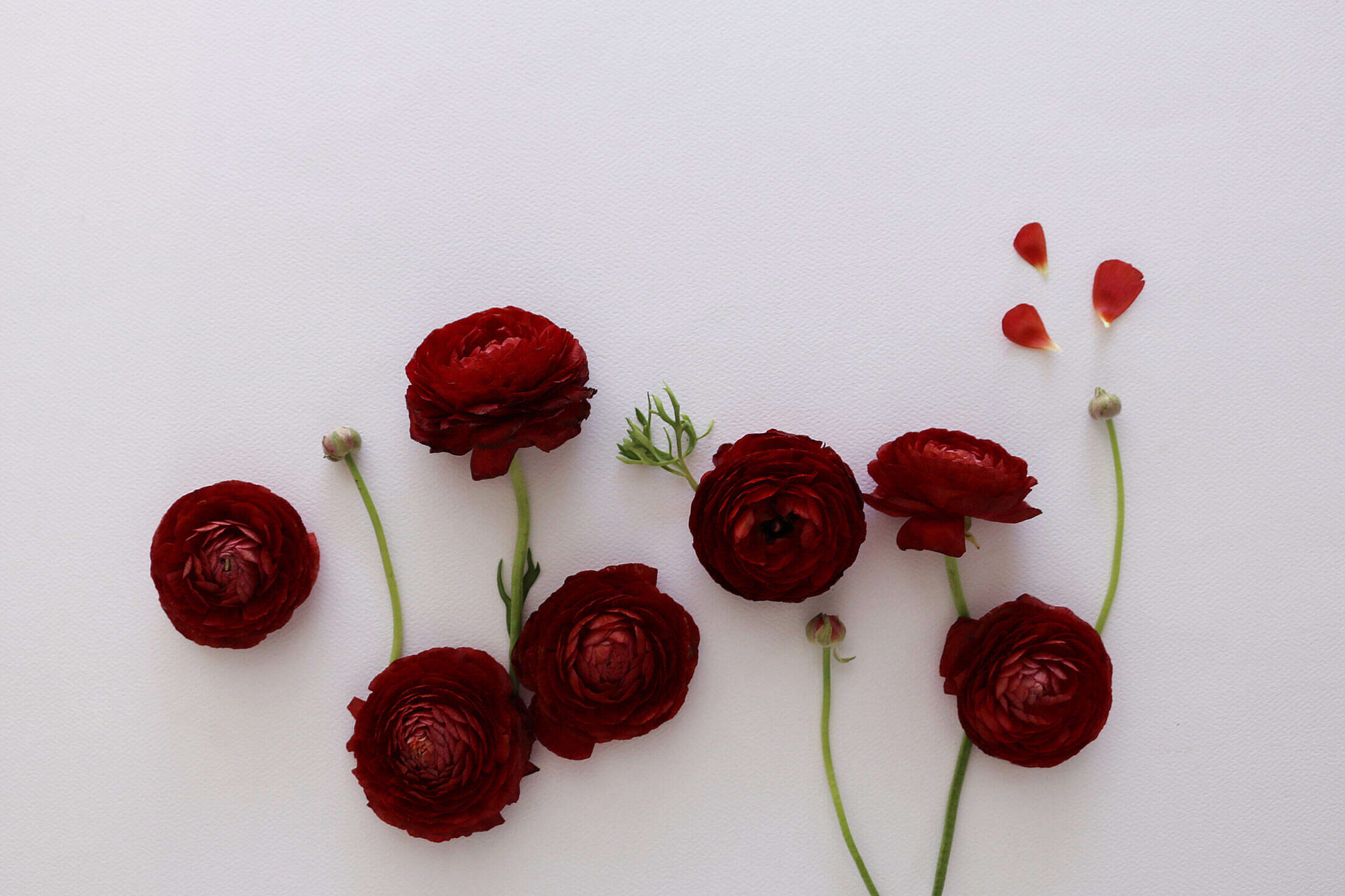 Red Flowers Flat Lay Free Stock Photo