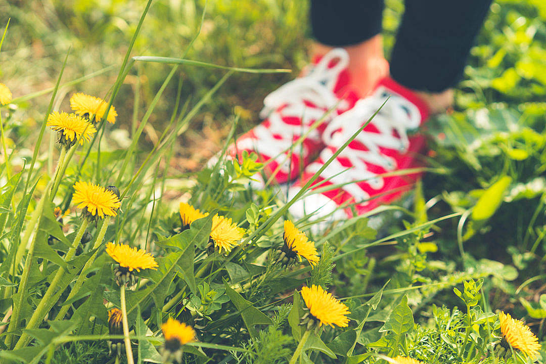 Download Red Happy Shoes in Grass and Dandelions FREE Stock Photo