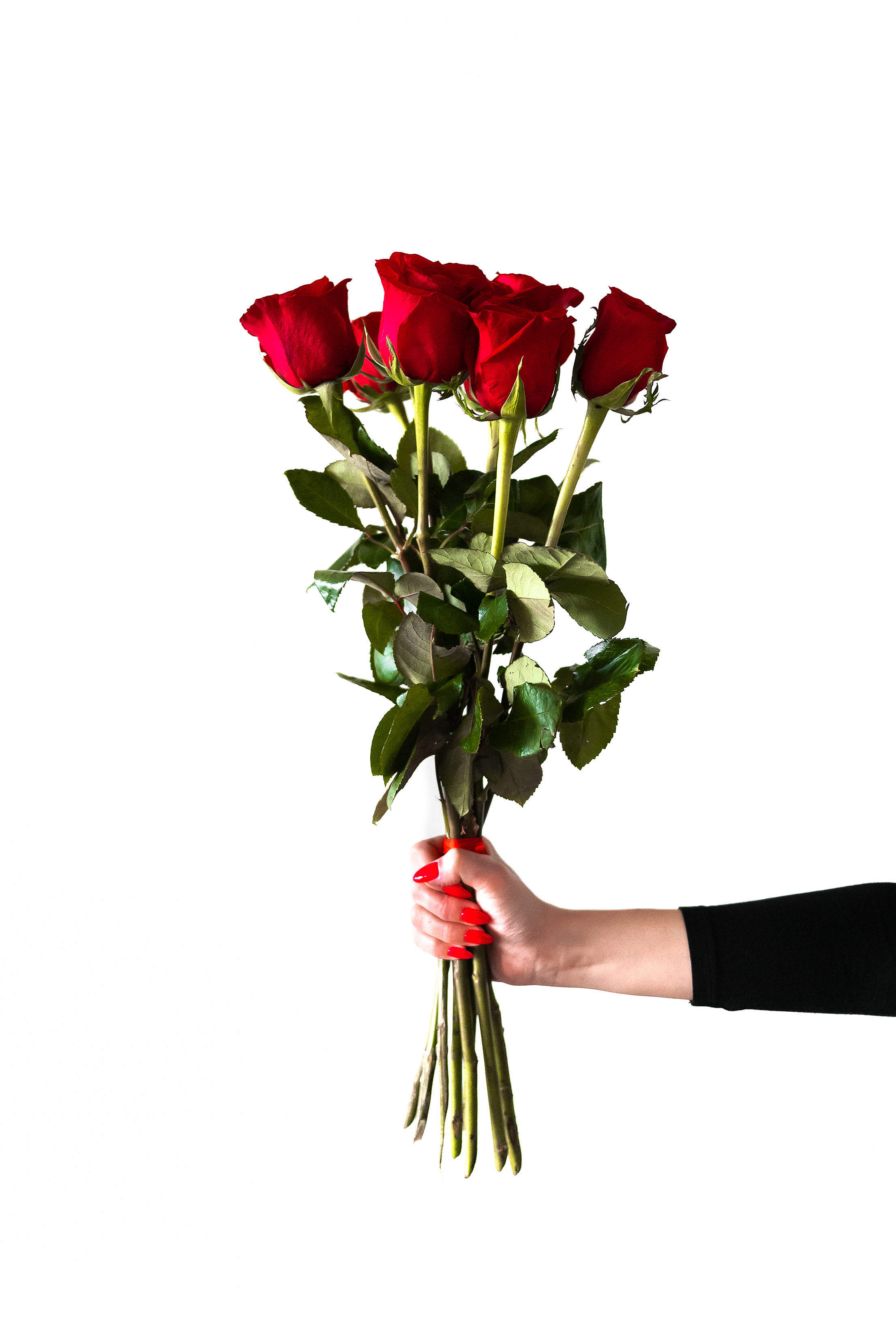 Red Roses in Woman's Hand Free Stock Photo