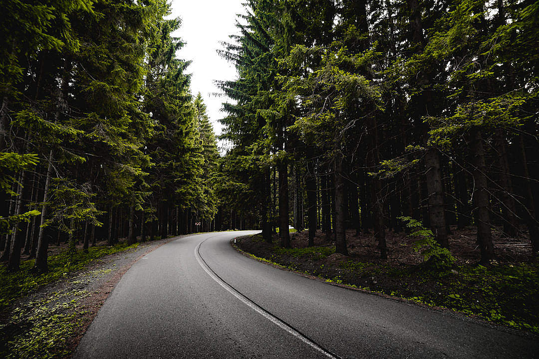 Download Road in Dark Forest FREE Stock Photo