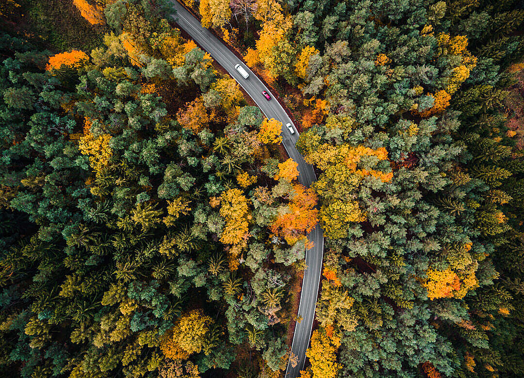 Download Road in the Woods Aerial FREE Stock Photo