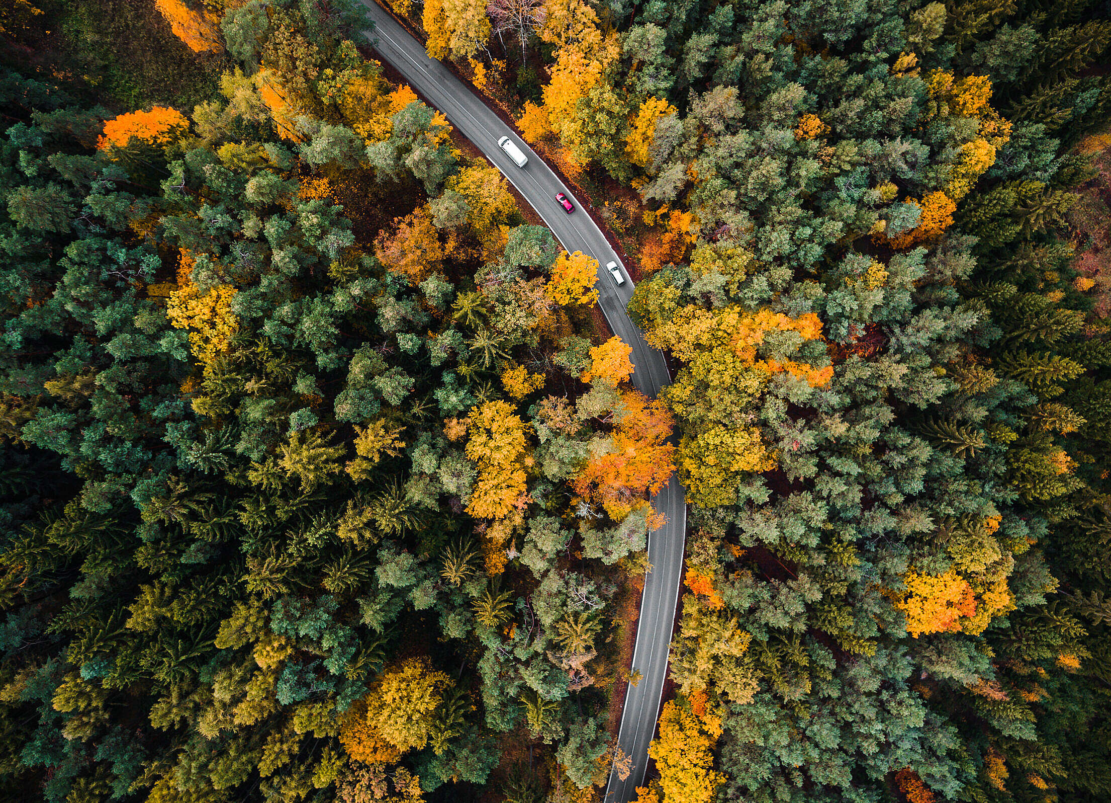 Road in the Woods Aerial Free Stock Photo