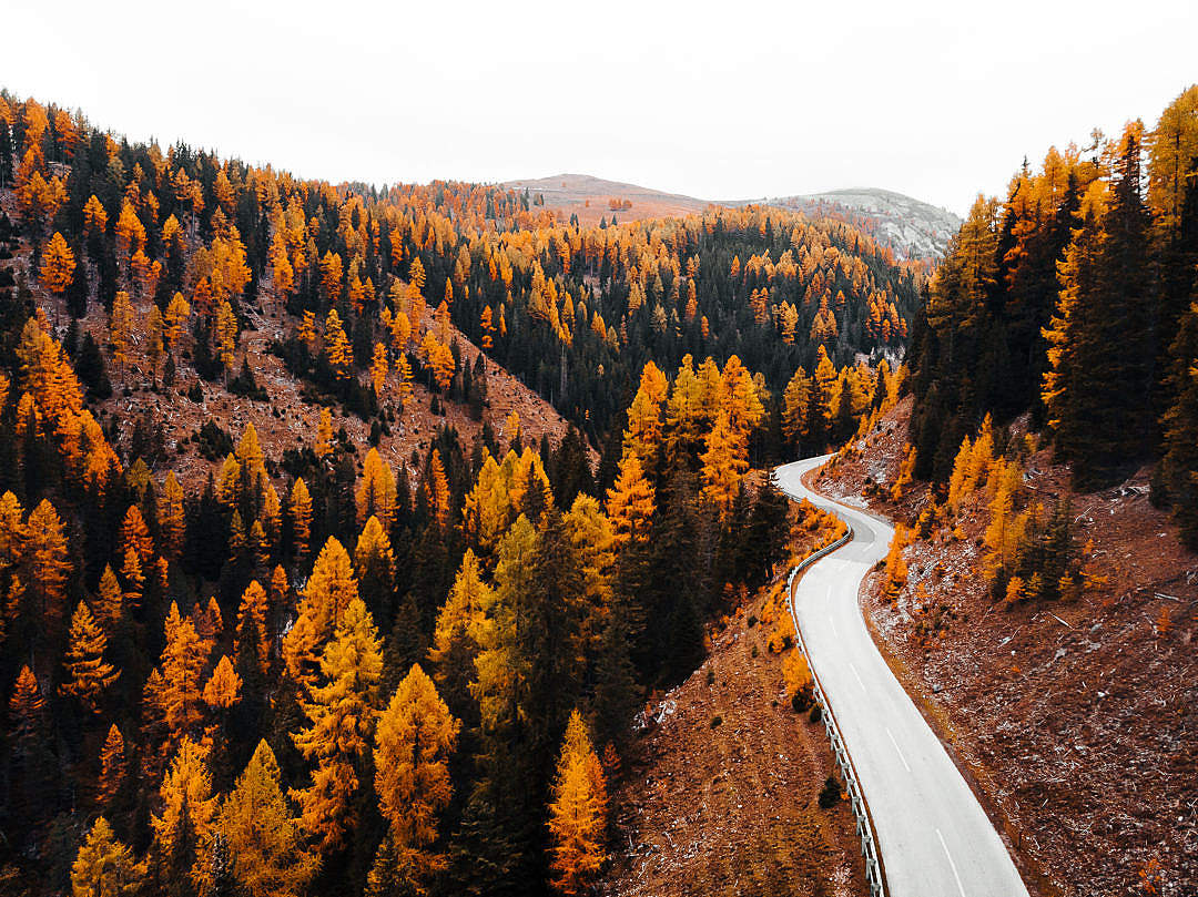 Download Road Leading Through The Forest FREE Stock Photo