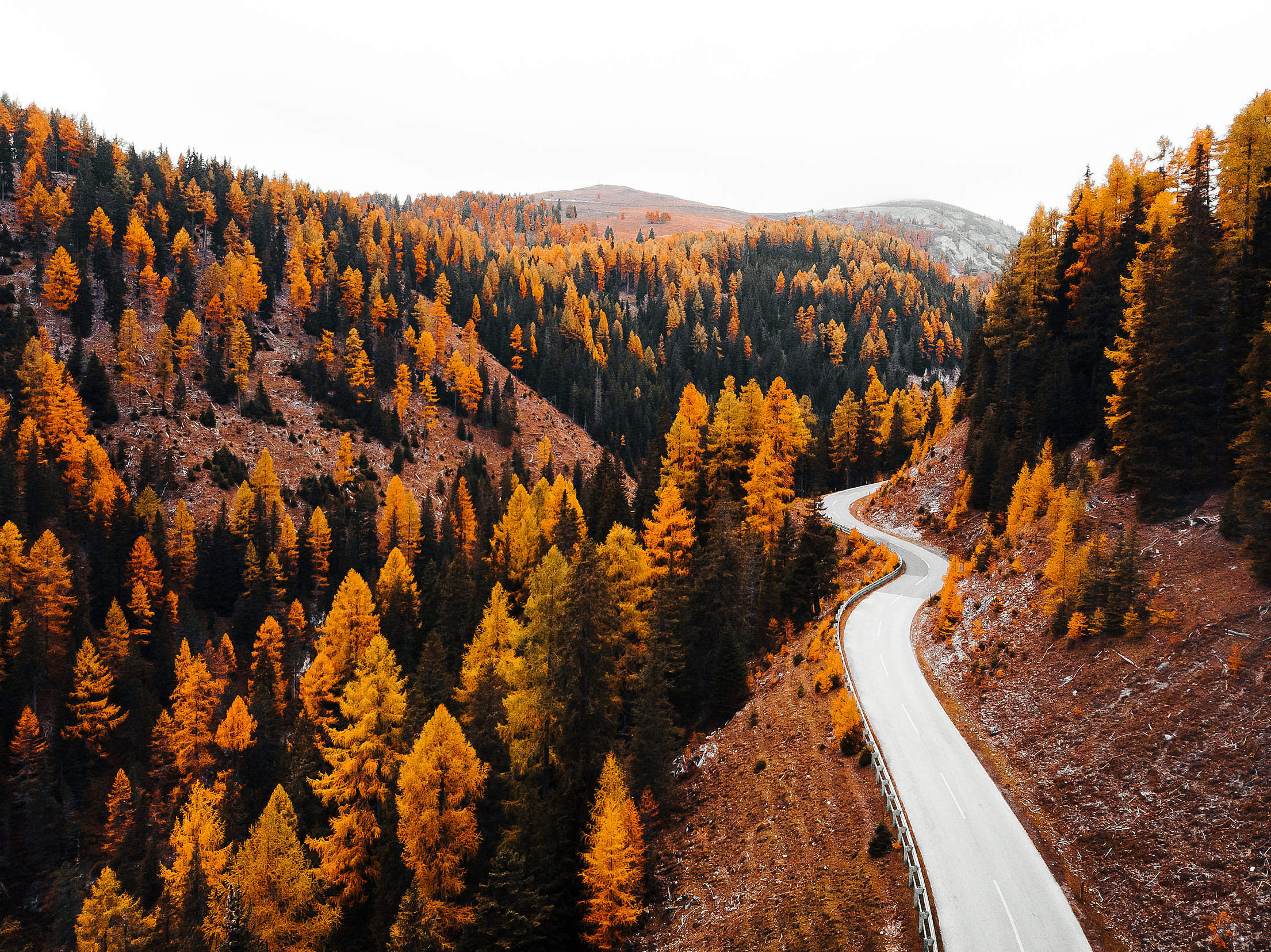 Road Leading Through The Forest Free Stock Photo
