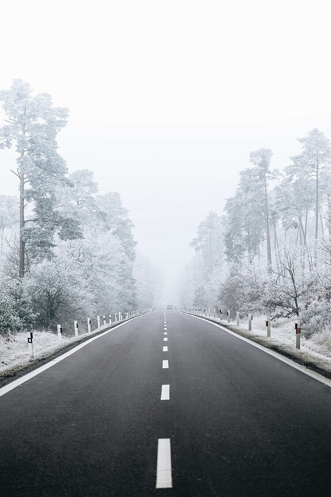Download Road Through Snowy Forest FREE Stock Photo