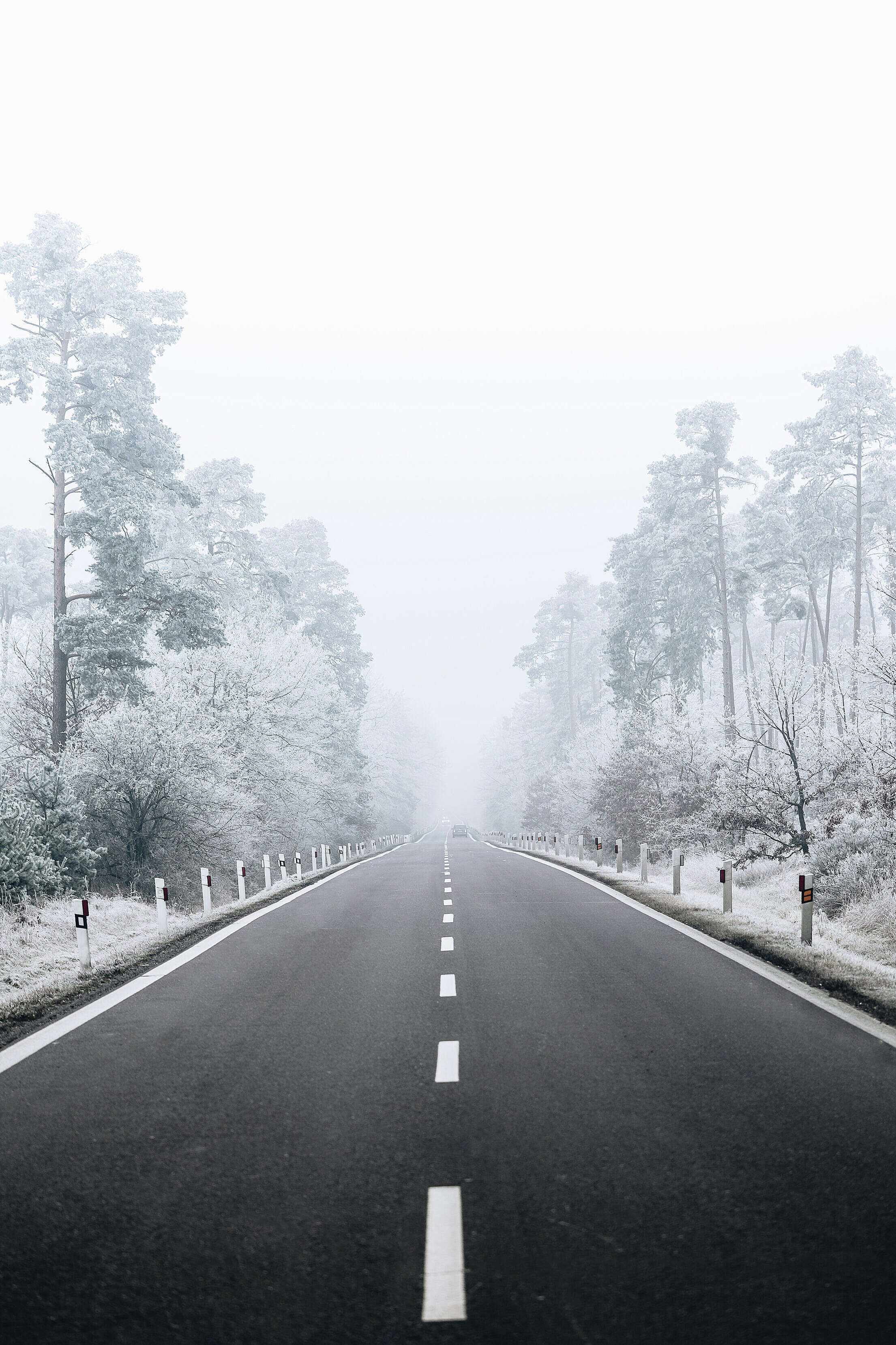 Road Through Snowy Forest Free Stock Photo