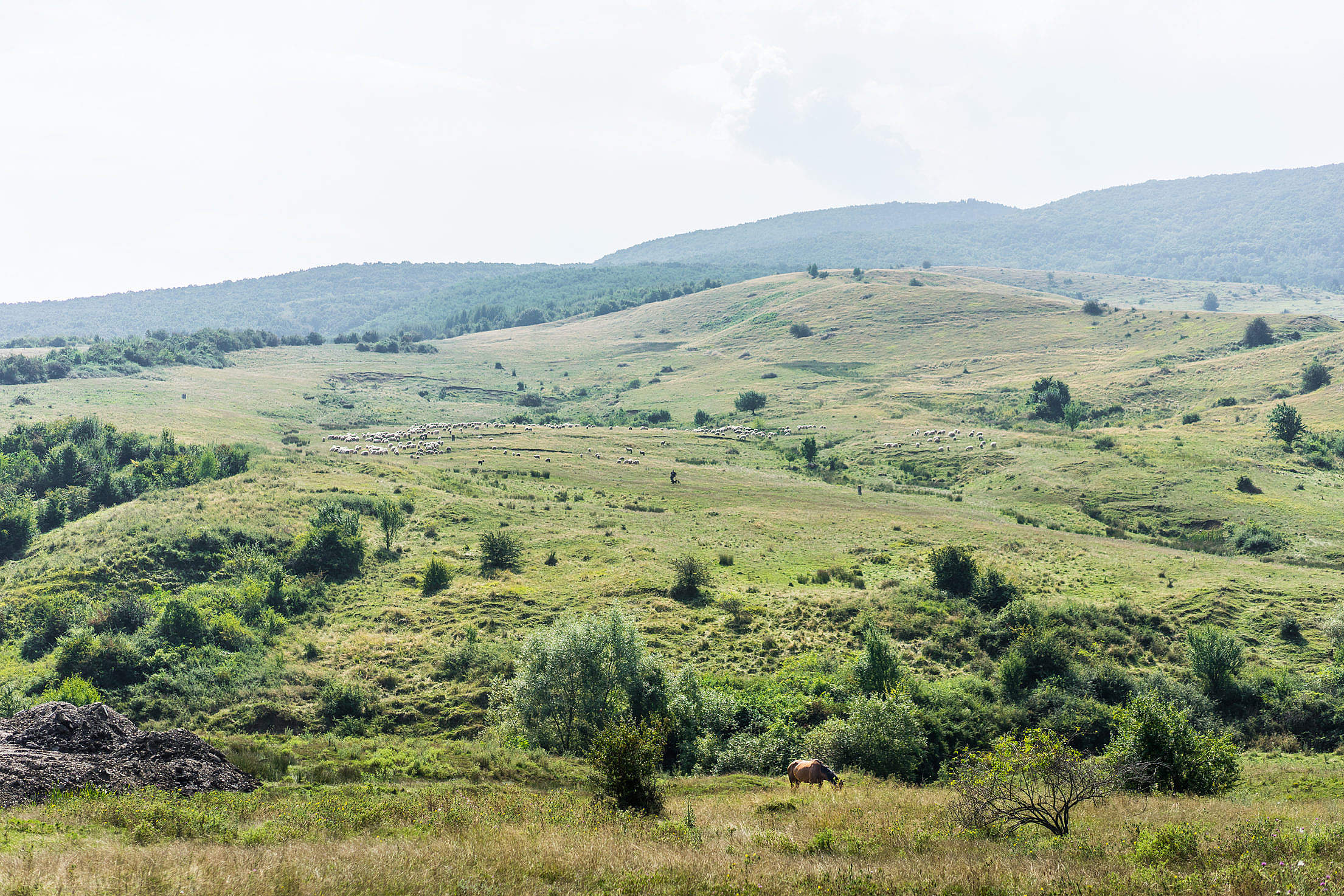 Romanian Nature with Horse and Flock of Sheep Free Stock Photo