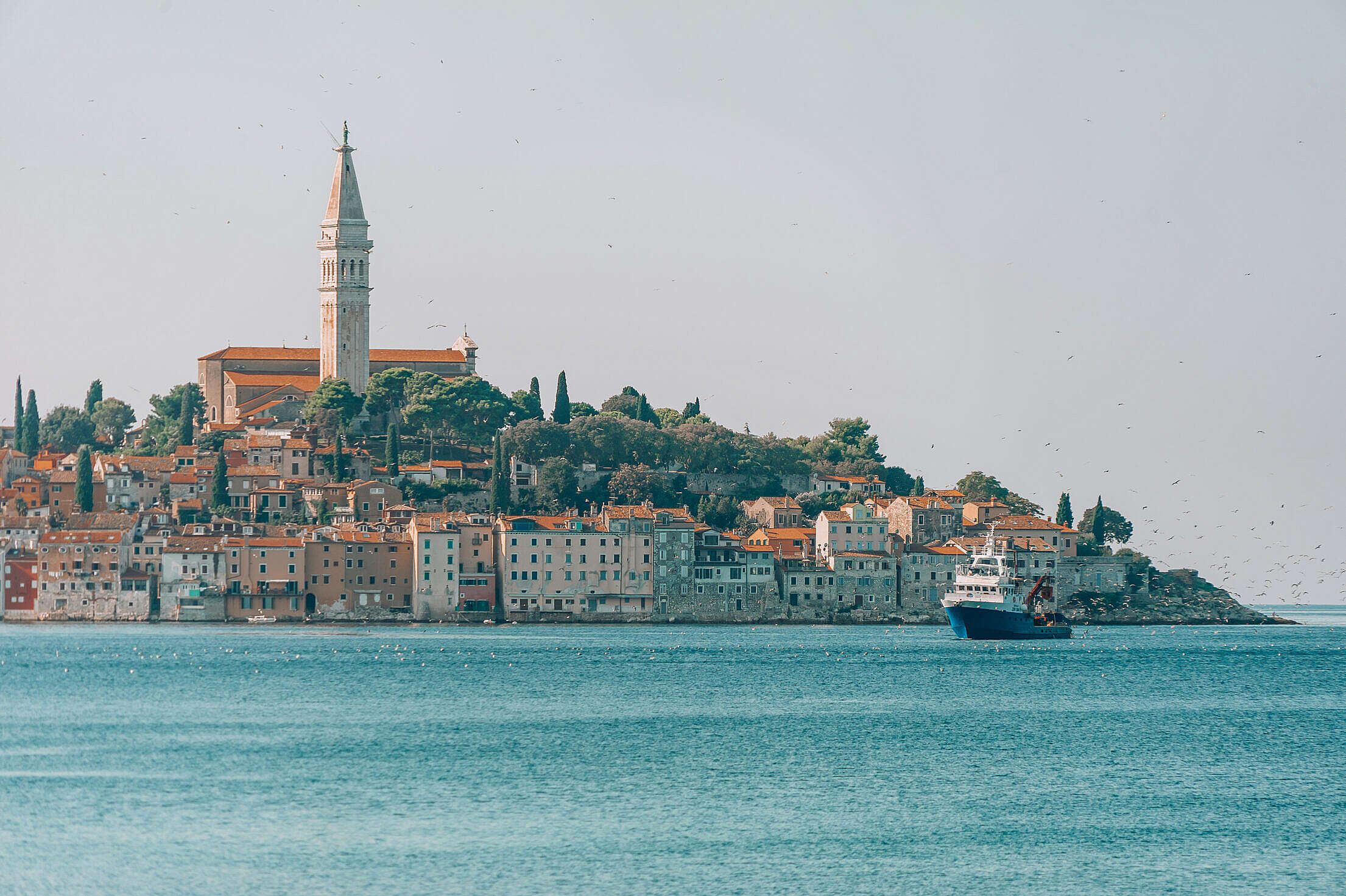 Seagulls Following Fishing Boat near Rovinj Town, Croatia Free Stock Photo