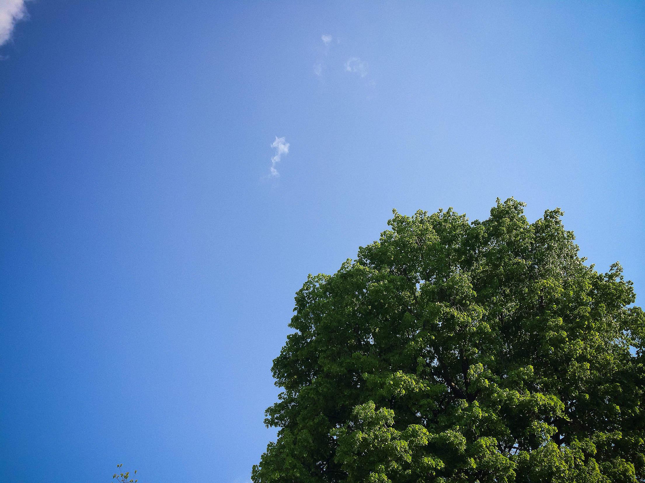 Sky with Tree Free Stock Photo