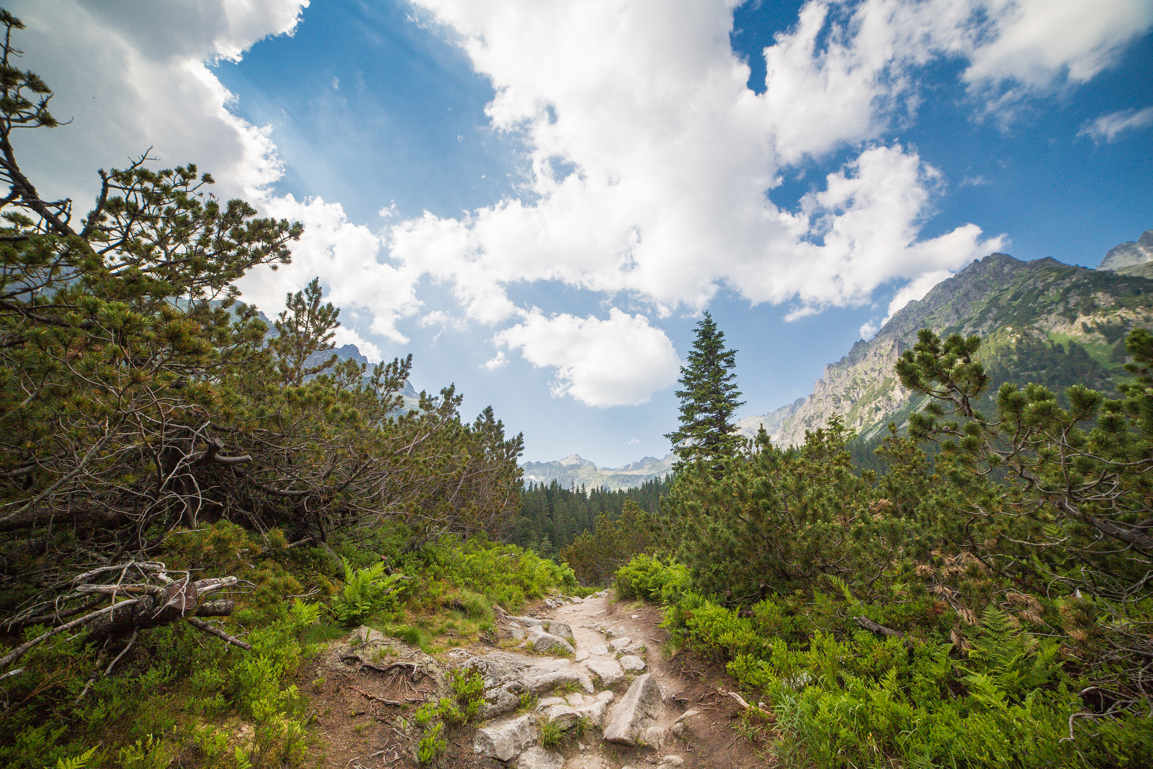 Small Path in the Middle of High Tatras, Slovakia Free Stock Photo