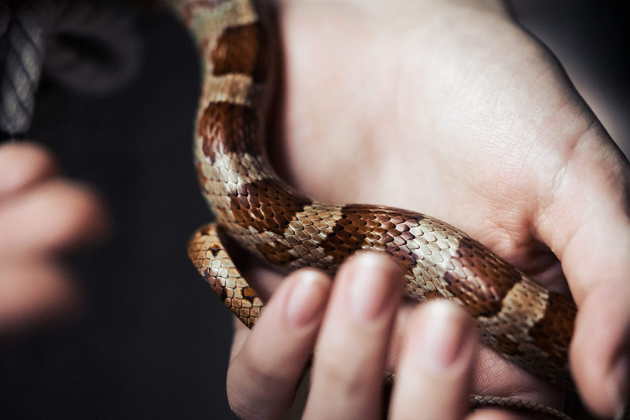 Snake in a Hand Free Stock Photo