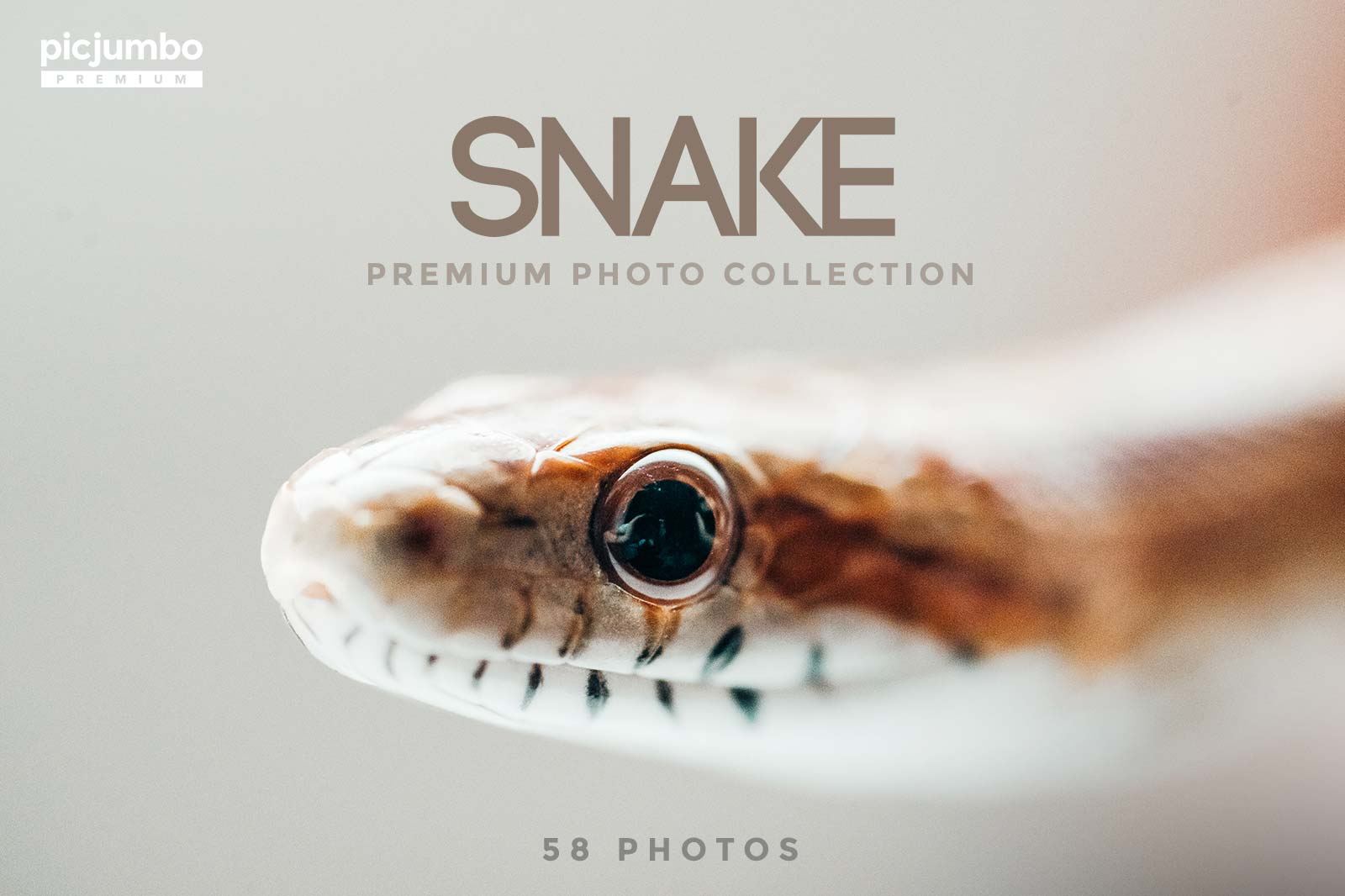 Snake stock photo collection