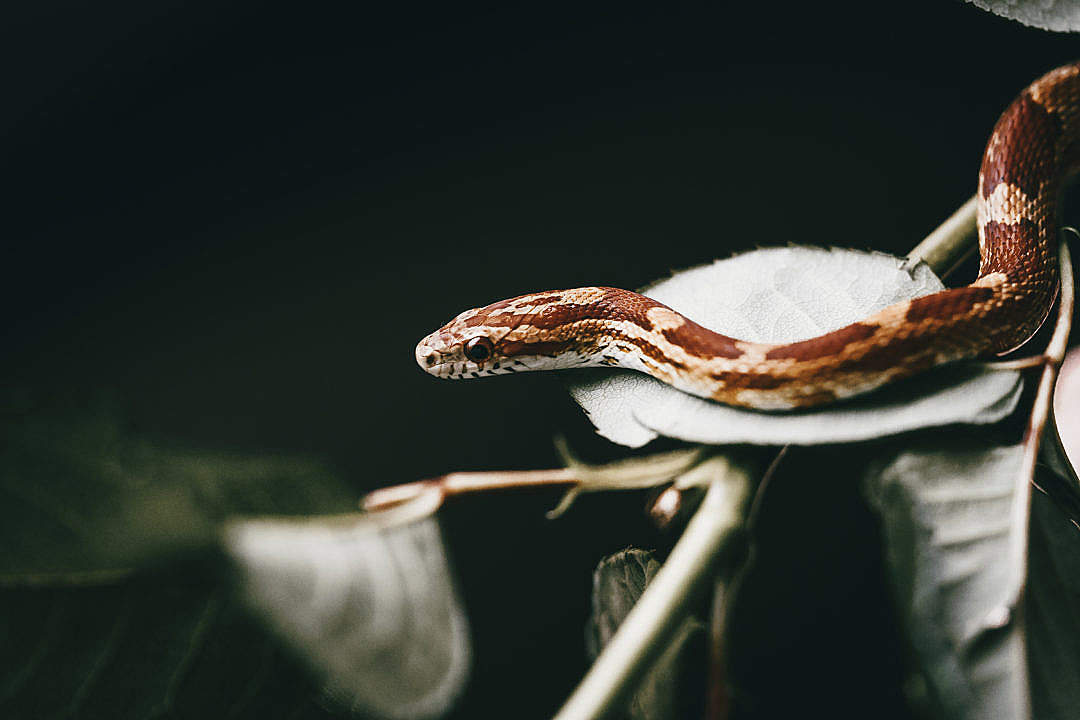 Download Snake Slithering on the Leaf FREE Stock Photo