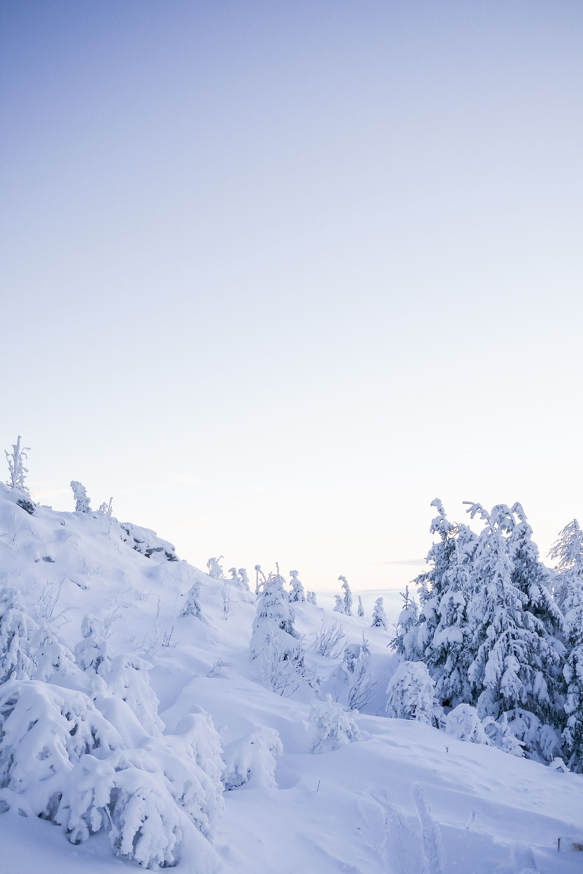 Snow Covered Landscape Free Stock Photo