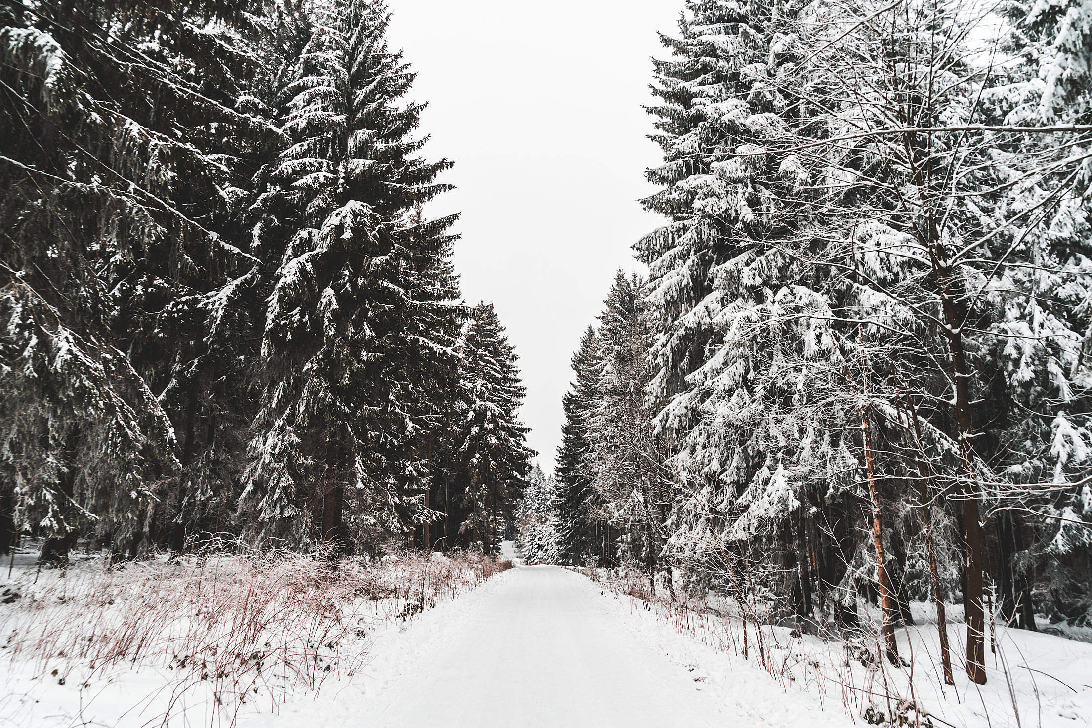 Snow Covered Road and Trees Free Stock Photo