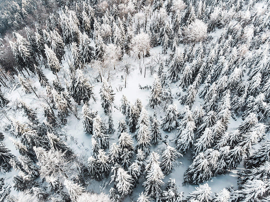 Download Snow Forest Aerial FREE Stock Photo