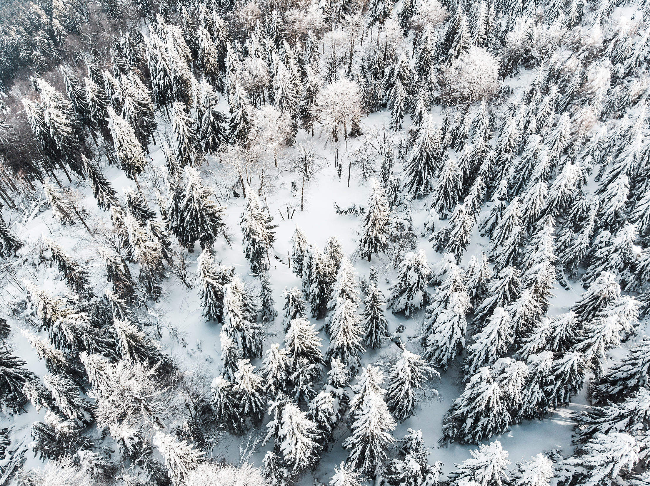 Snow Forest Aerial Free Stock Photo