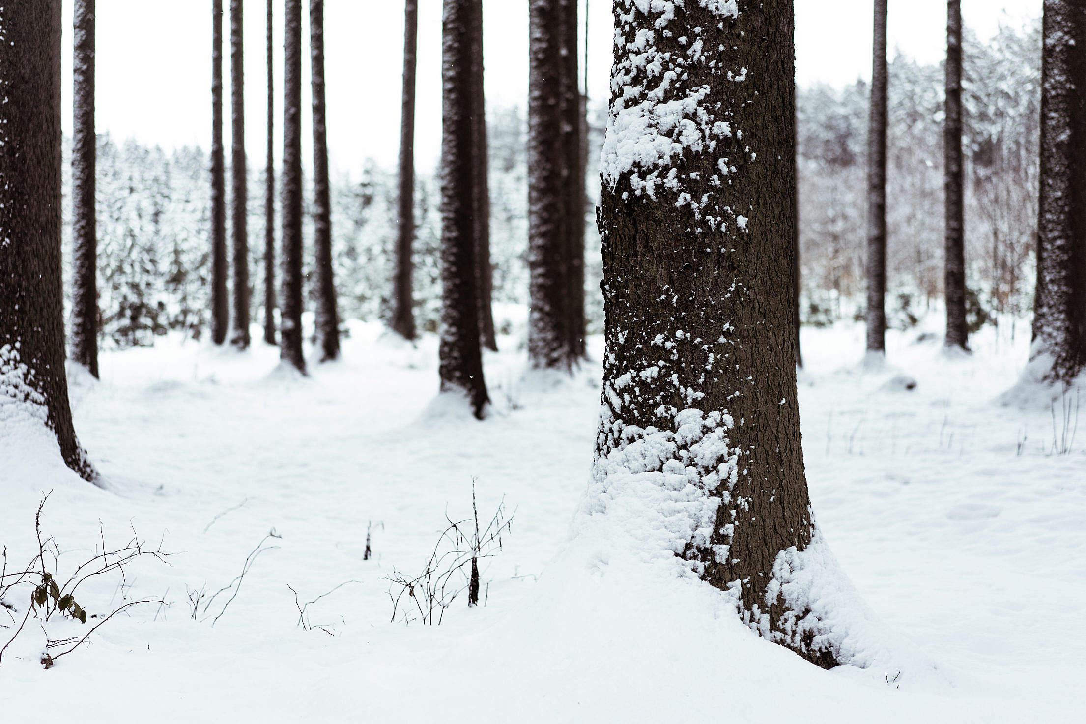 Snowy Tree Trunk Free Stock Photo