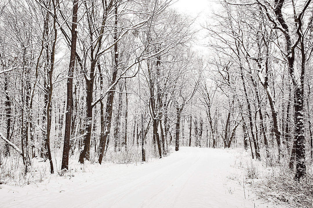 Download Snowy Winter Road in a Forest FREE Stock Photo