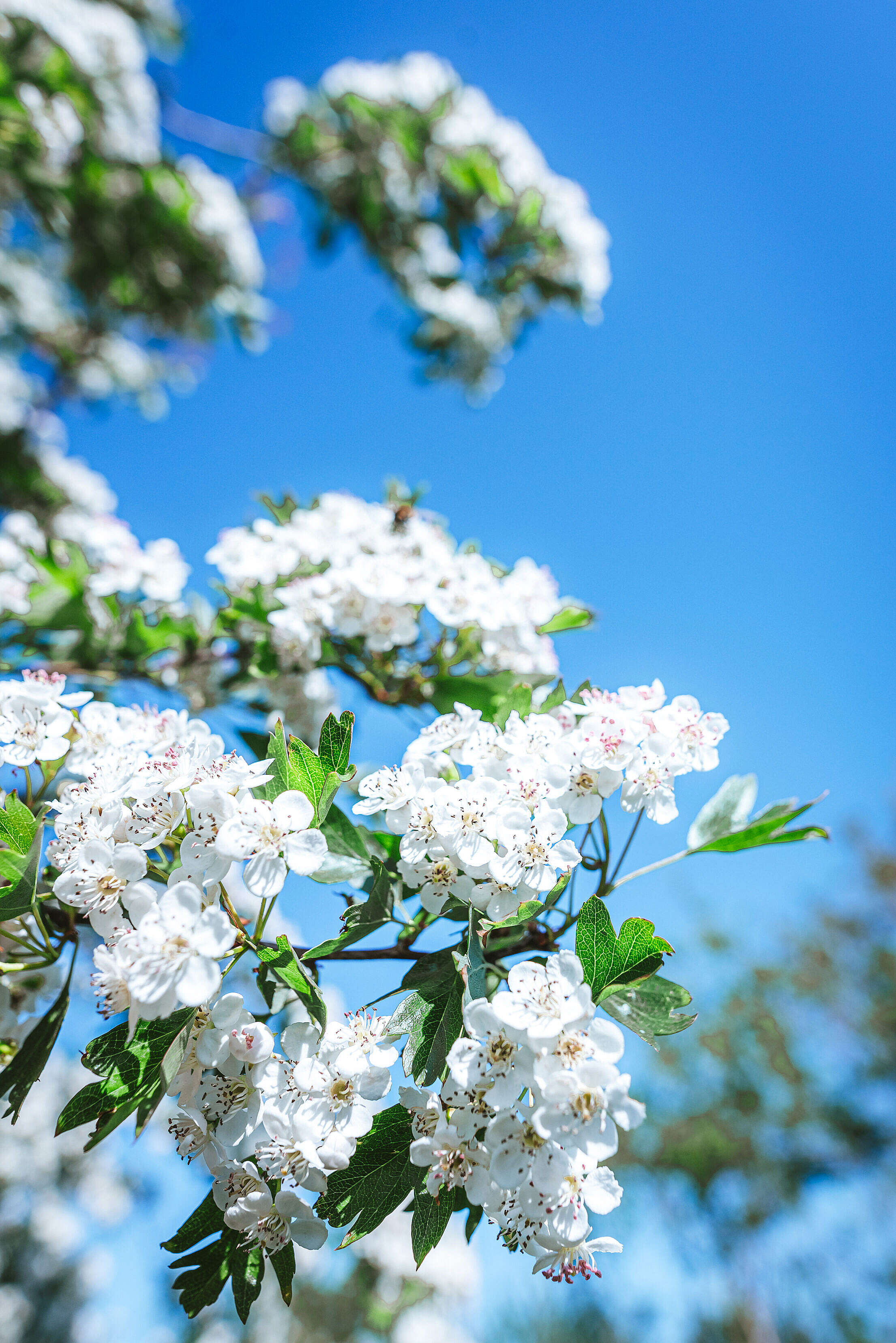 Spring Flowers Against Blue Sky Free Stock Photo