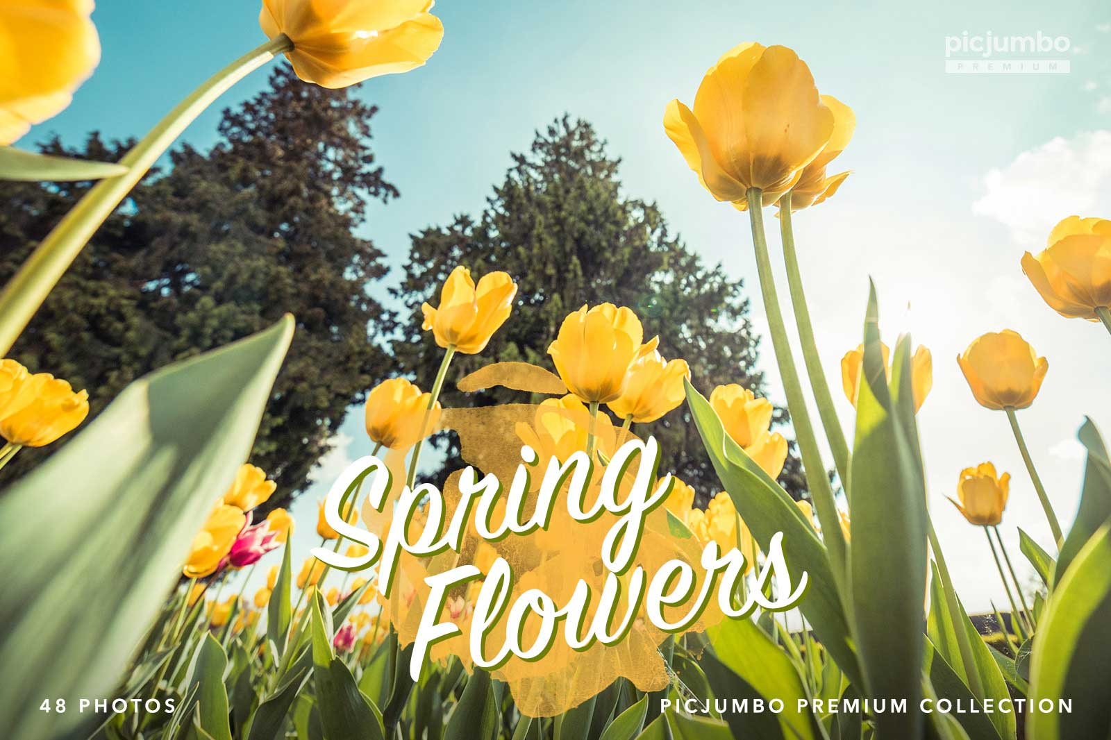 Spring Flowers — get it now in picjumbo PREMIUM!