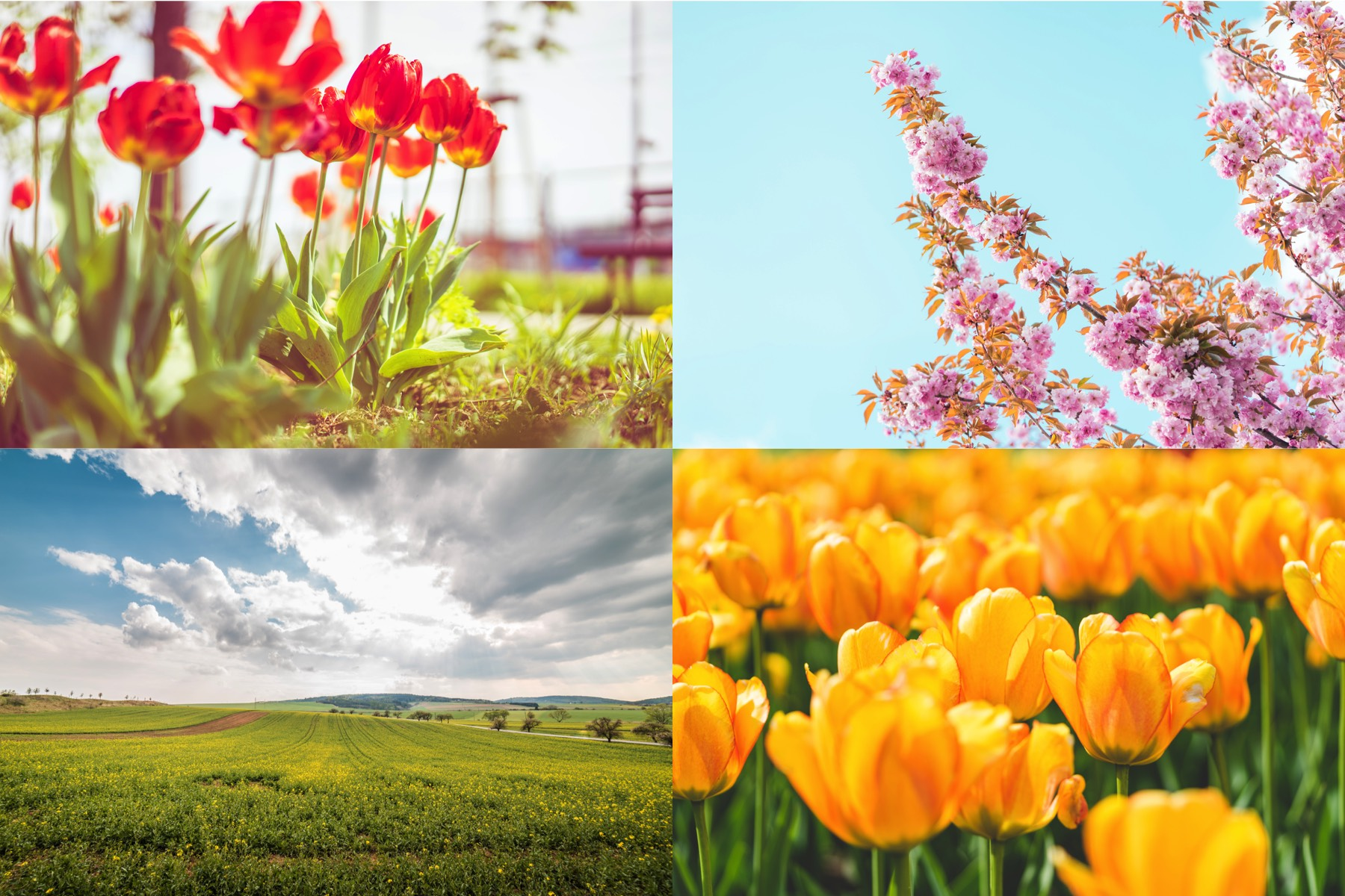 Spring Flowers Photo Collection By Picjumbo