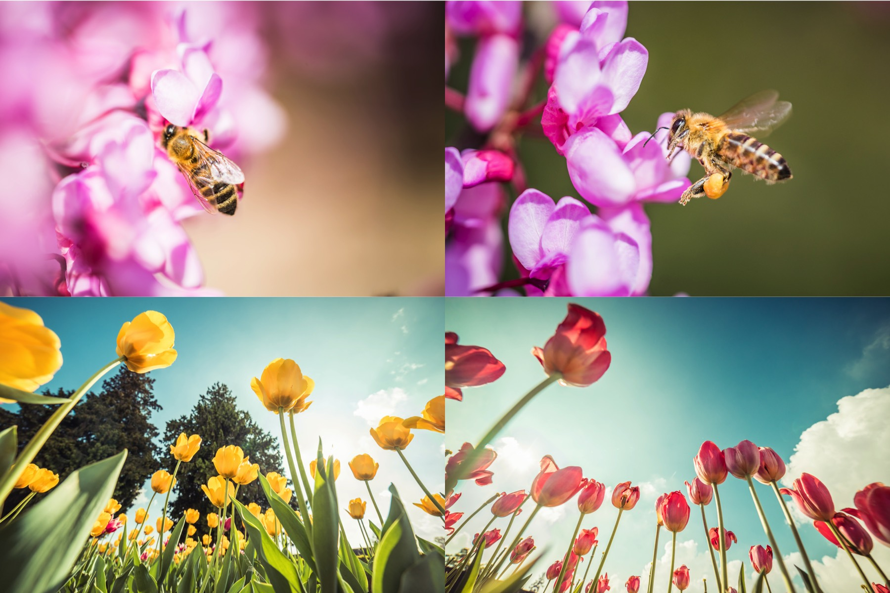 spring-flowers-picjumbo-premium-collection-preview-2