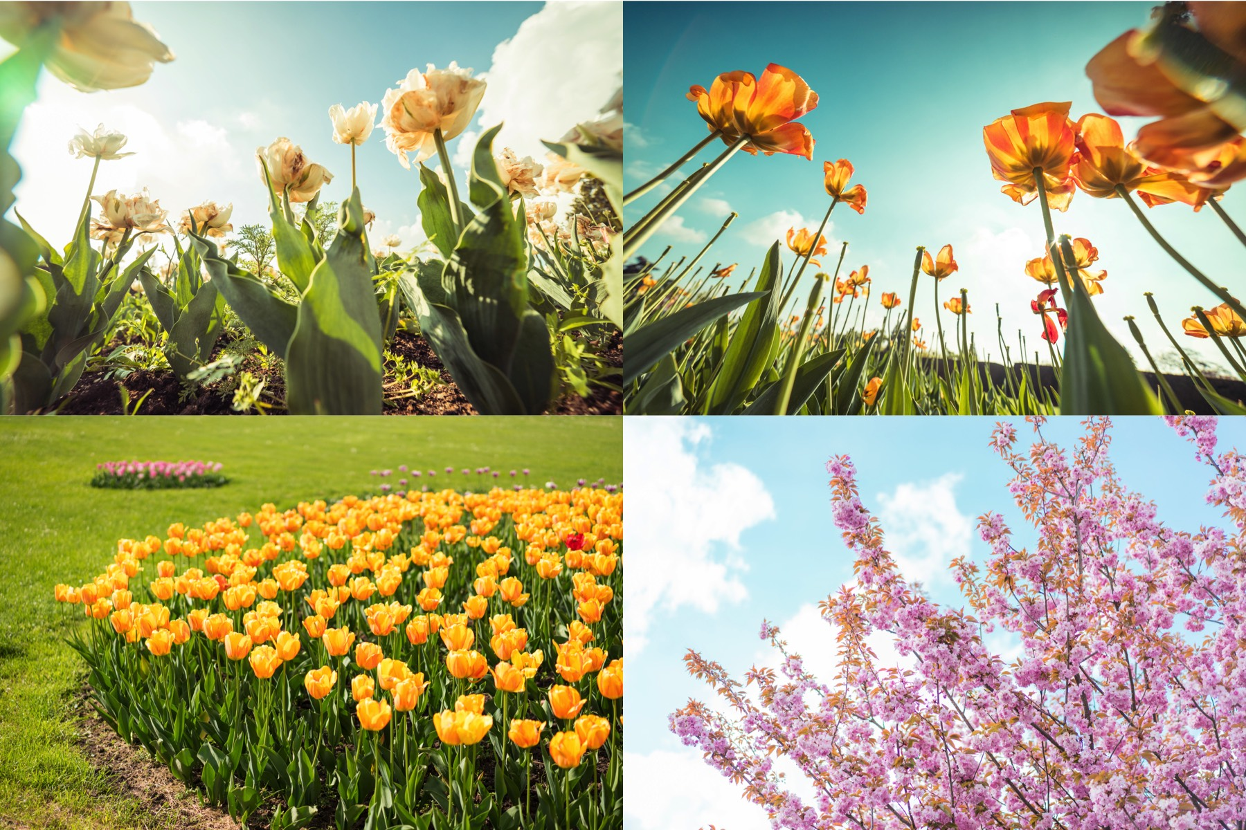 spring-flowers-picjumbo-premium-collection-preview-3