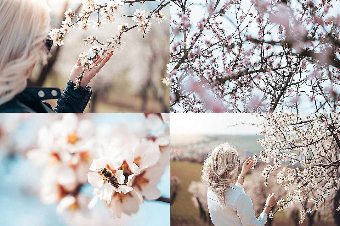 Download Wonderful Spring Blooms FREE Stock Photo