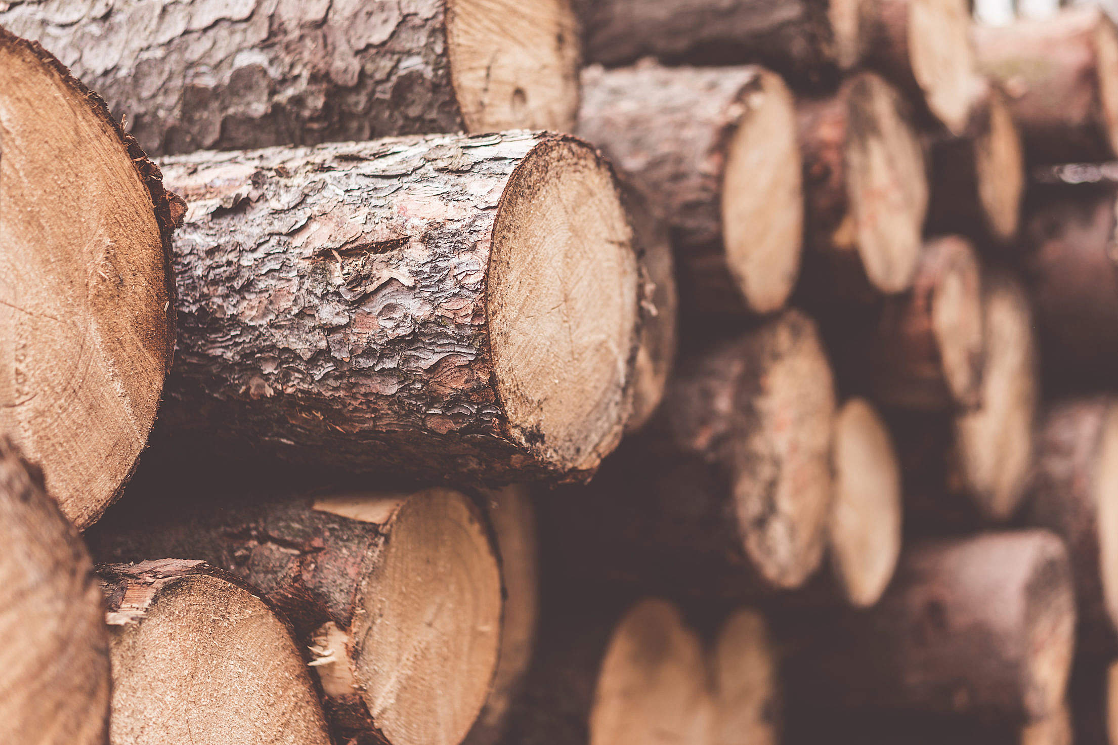 Stack of Felled Trees Close Up Free Stock Photo