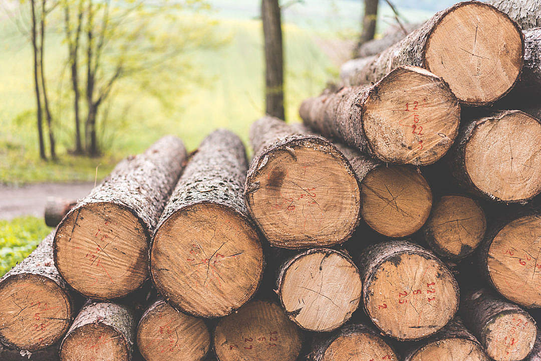 Download Stack of Felled Trees Felling Forestry Operations FREE Stock Photo