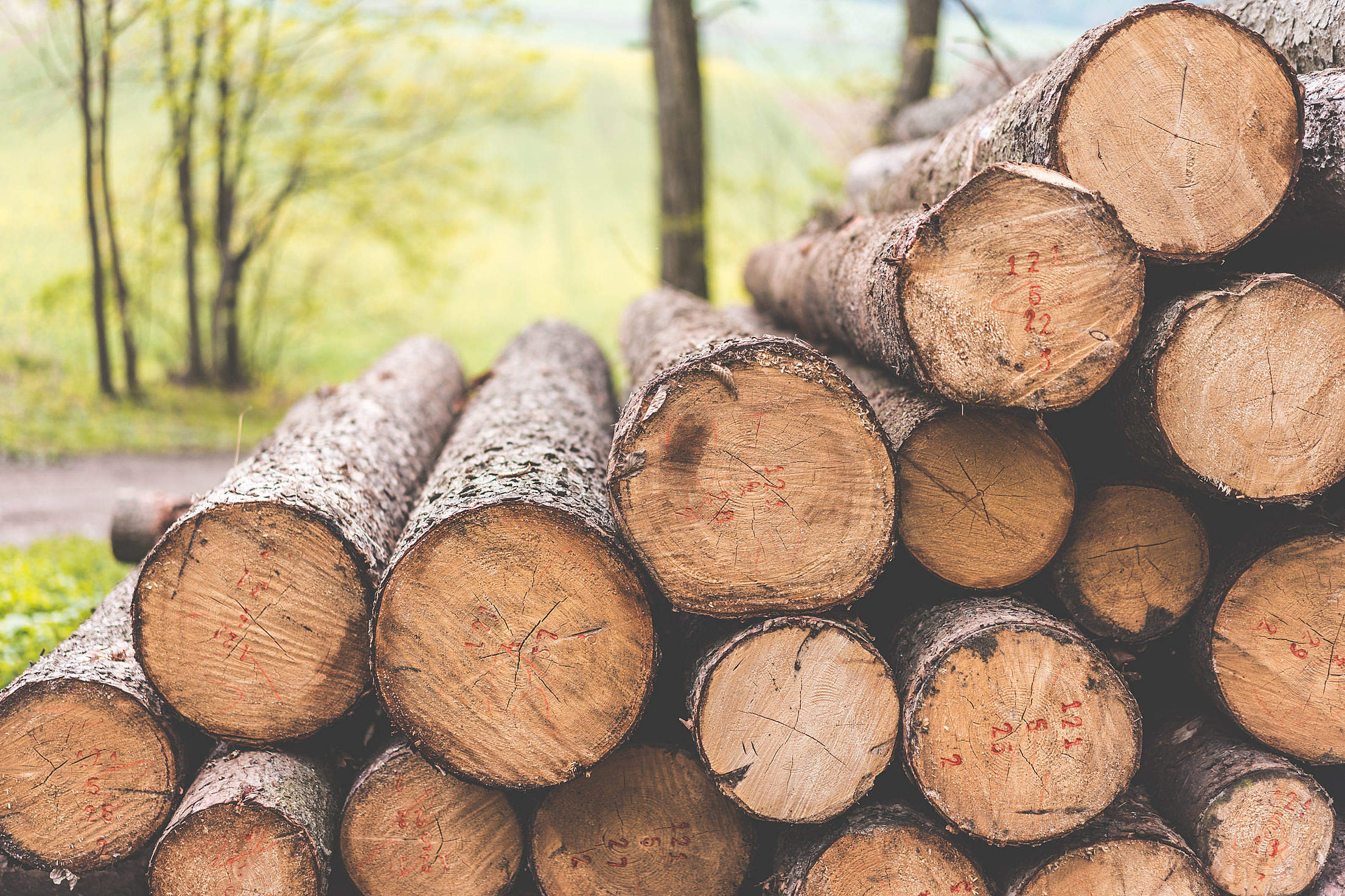 Stack of Felled Trees Felling Forestry Operations Free Stock Photo