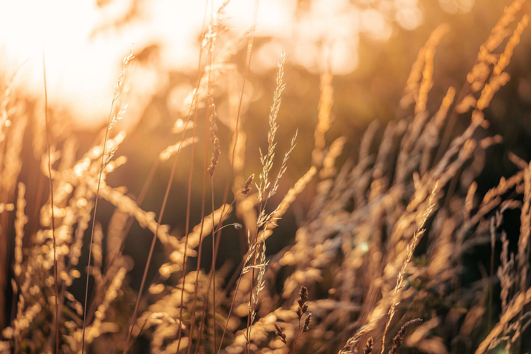 Summer Grass Against The Sun Free Stock Photo