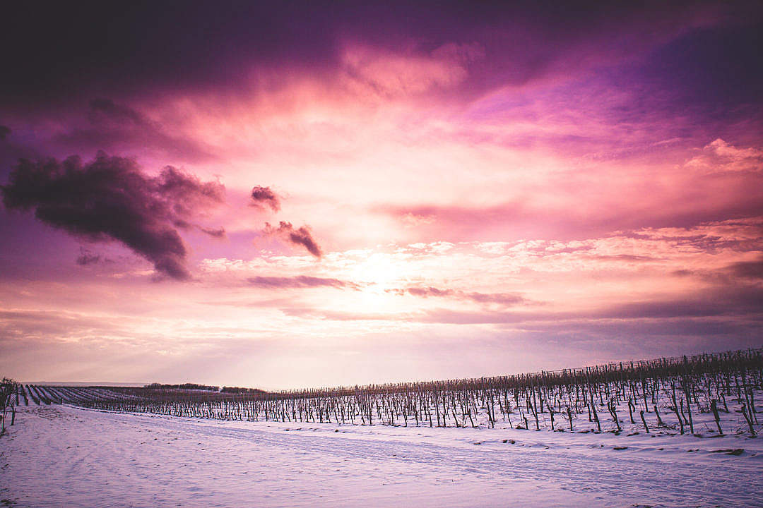 Download Sun and Clouds over Snowy Wineyard FREE Stock Photo