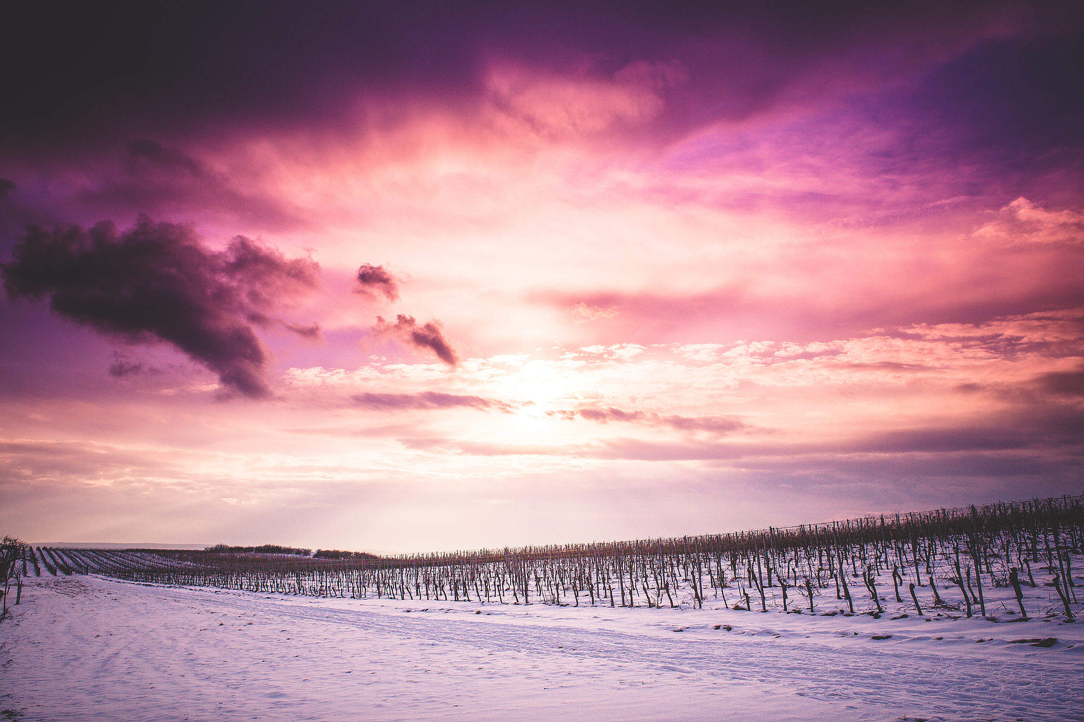 Sun and Clouds over Snowy Wineyard Free Stock Photo