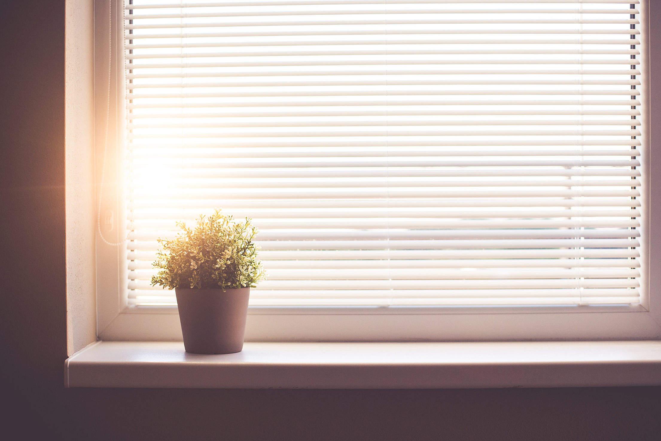 Sun Shining Through the Window with Sun Blind Free Stock Photo