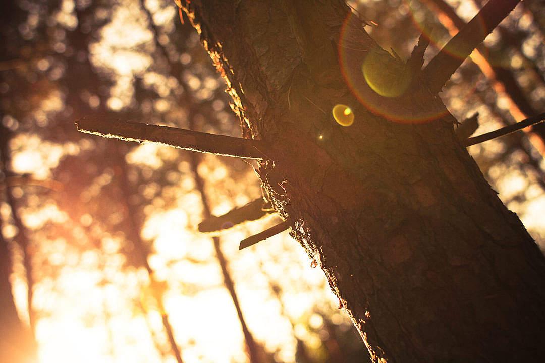 Download Sunlights vs. Tree FREE Stock Photo