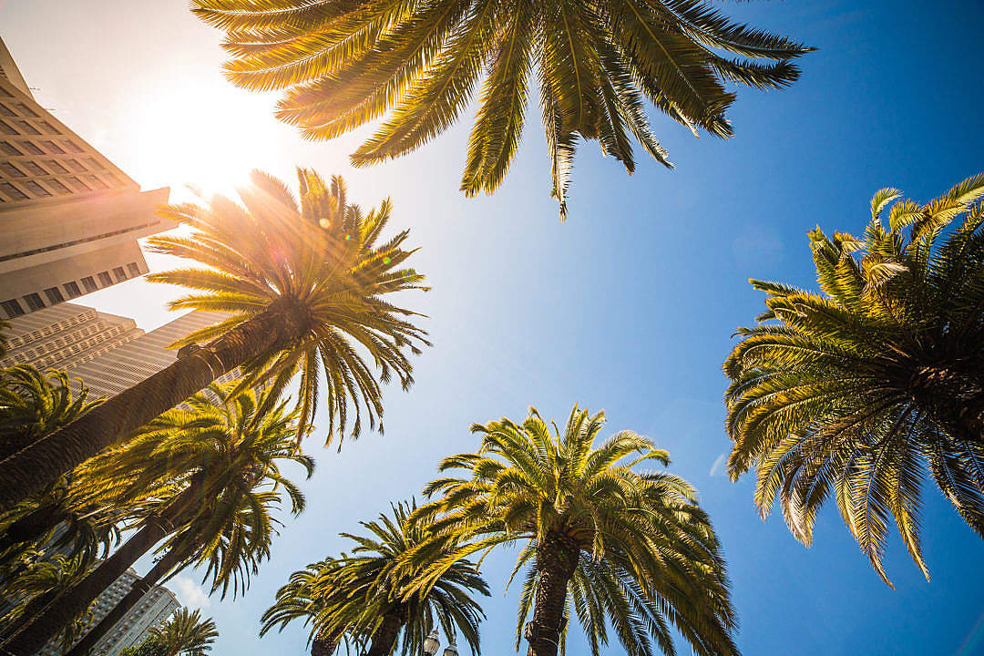 Download Sunny Bottom View of High Tropical Palms FREE Stock Photo