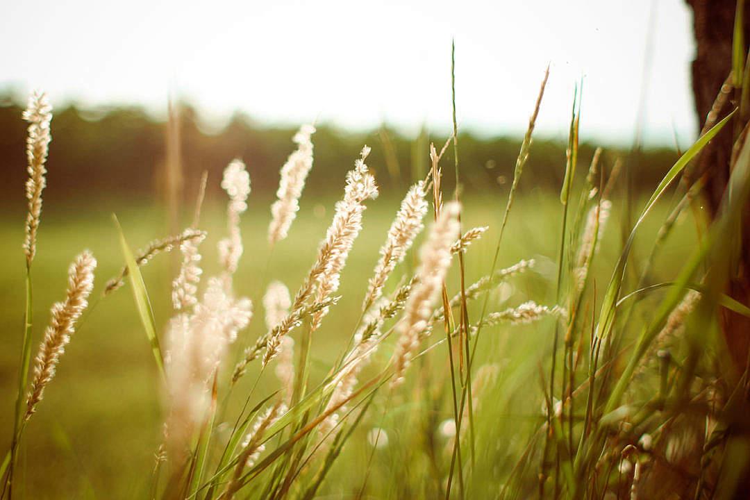 Download Sunset Grass FREE Stock Photo