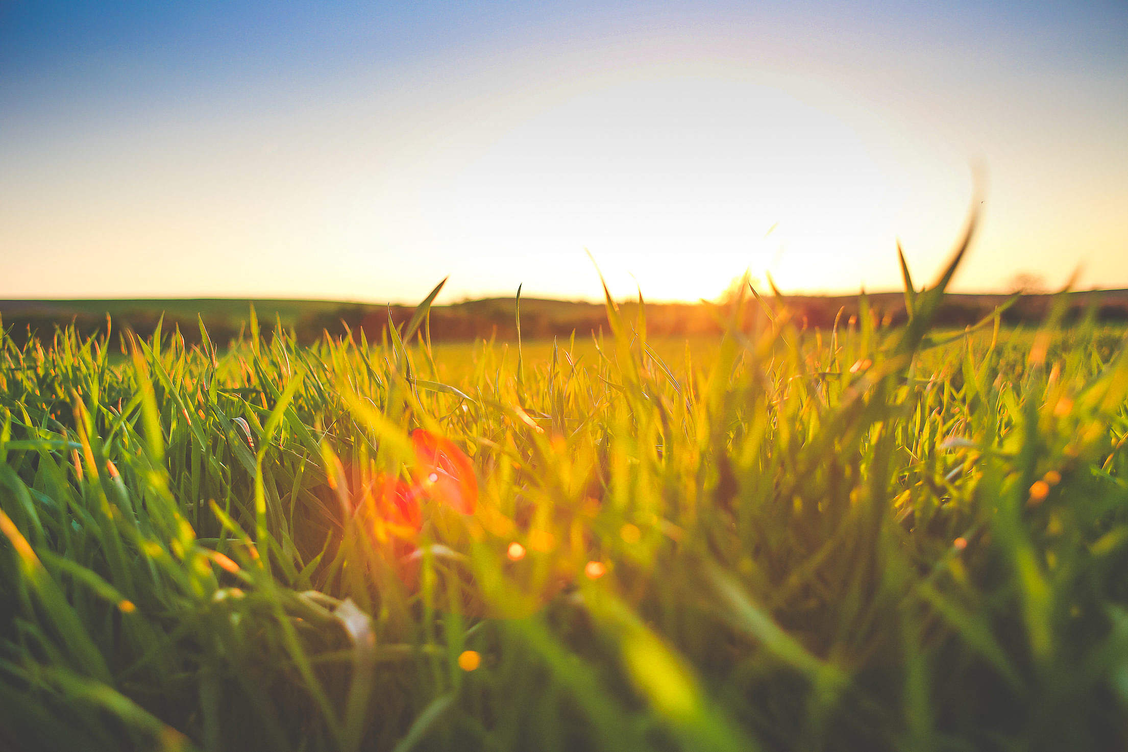 Sunset in Grass Free Stock Photo