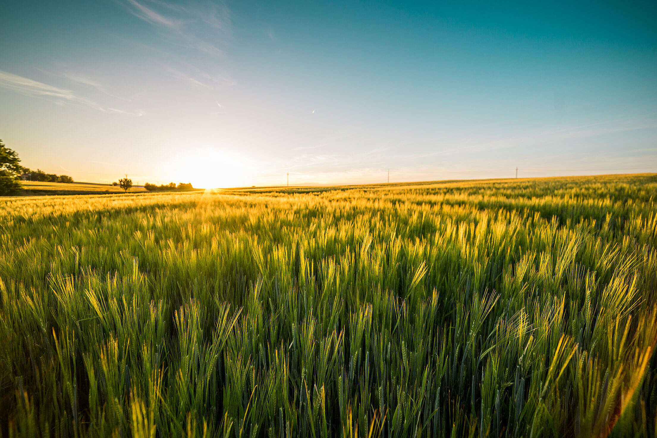 Sunset Over The Wheat Field Free Stock Photo